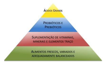 piramide alimentar