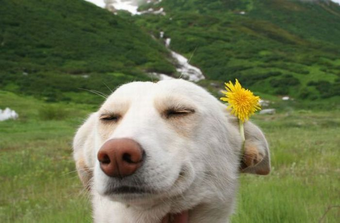 satisfied-dog