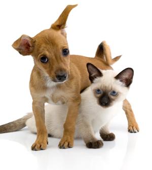 cat_dog