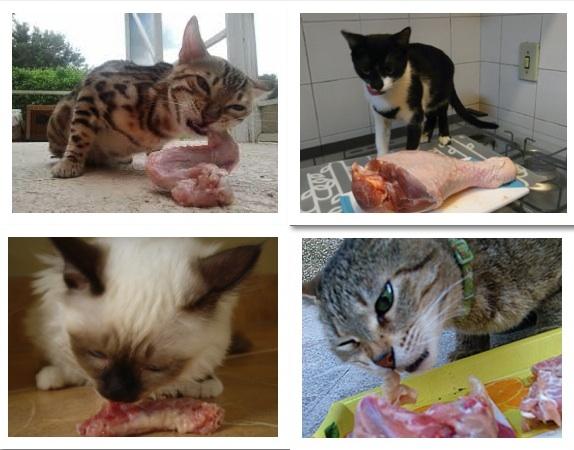gatos e ossos