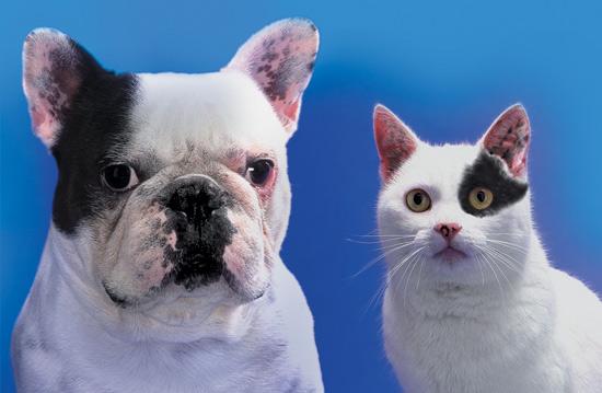 BW dogcat